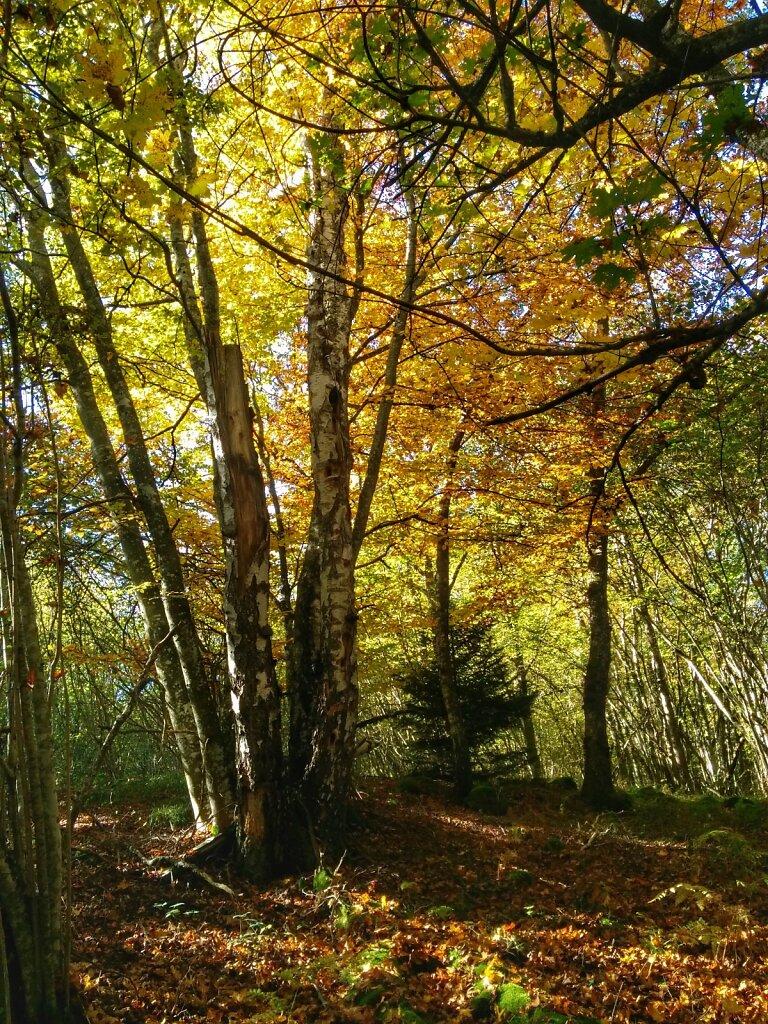 Les couleurs de l'automne. #automne