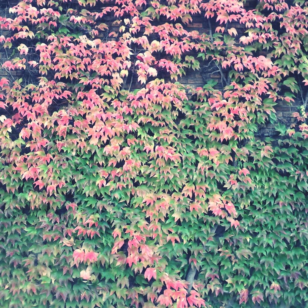 #Colors of Autumn