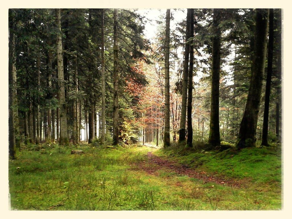A la cueillette aux champignons #forest #Colors of Autumn