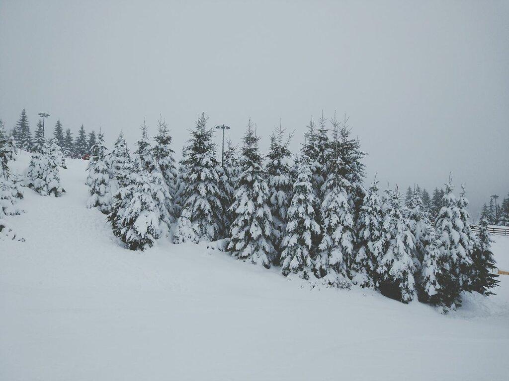 Il a neigé... #Neige #Tree #snow