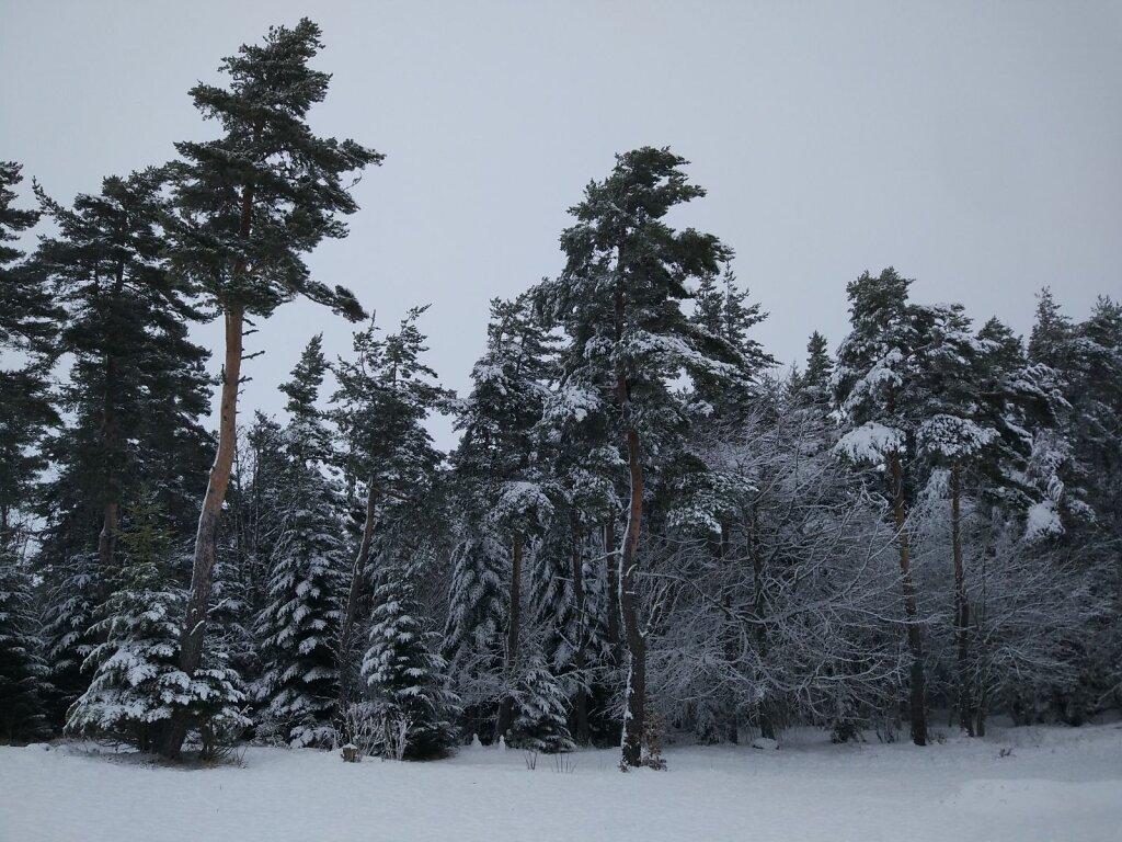 Winter trees #Neige